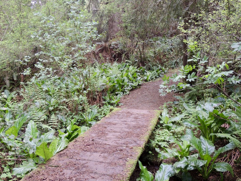 Bridge and ferns on Ceremonial Rock Trail