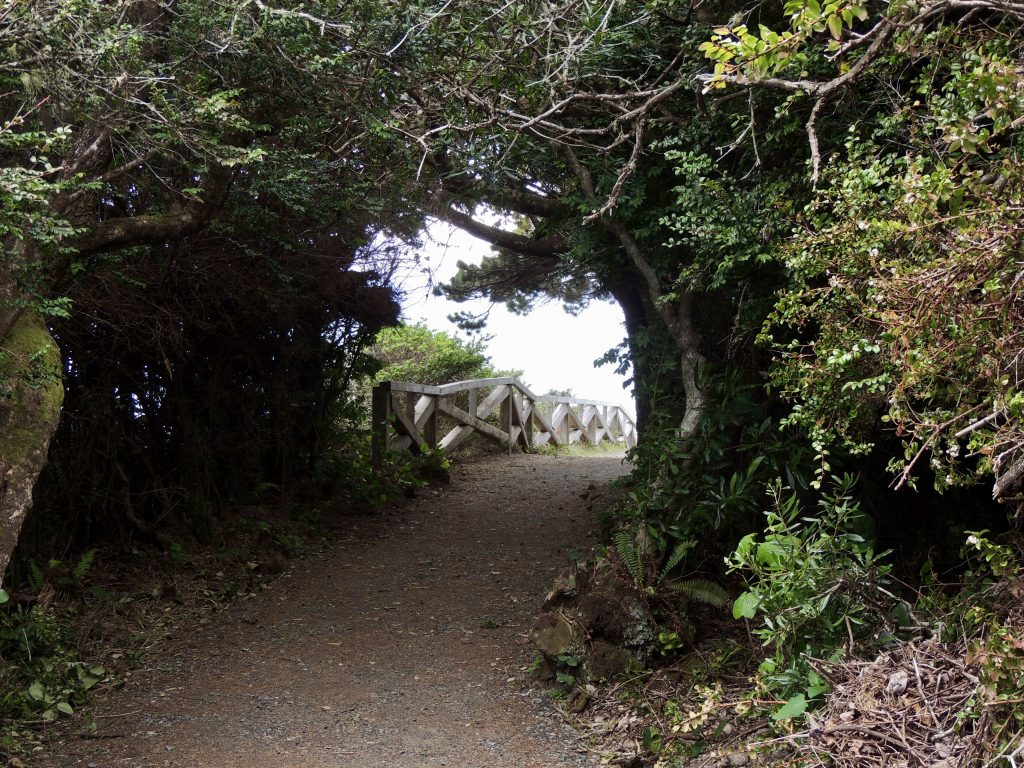 Trail to Patrick's Point Overlook