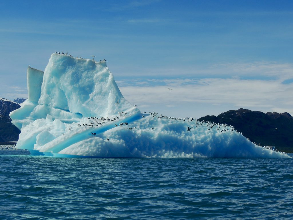 Iceberg with birds