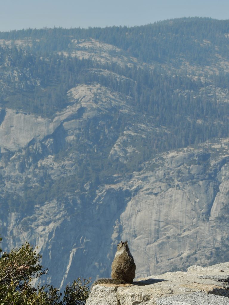 Squirrel at Glacier Point